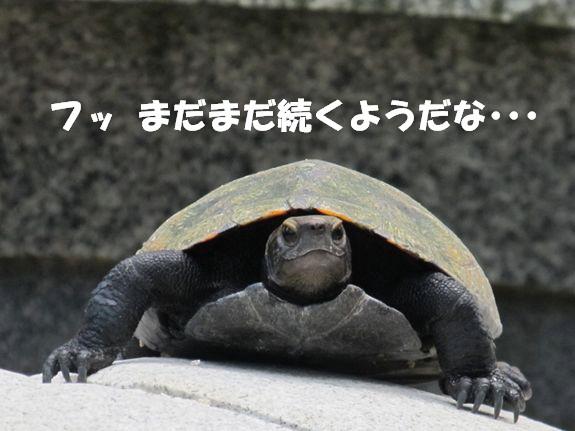 IMG_7069-1_R2.jpg
